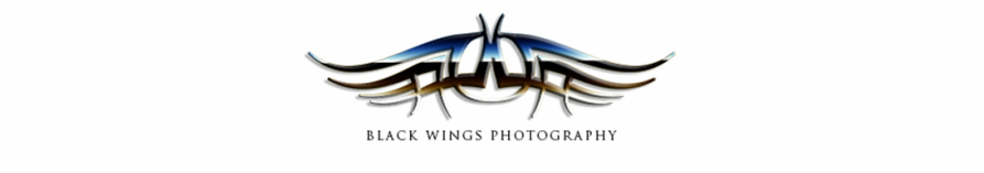 Black Wings Photography